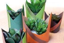 """Succulentes / Les photos de succulentes sont partout, c'est la plante tendance du moment. Clayrton's aime aussi cette plante et s'assuse à en faire des """"Pas à pas"""" pour vous fleuristes. N'hésitez pas à aller sur notre site pour y découvrir tous nos tutoriels d'emballages. http://clayrtons.com/category/workshop/"""