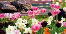 Blumenbeet / Üppige Blumenbeete sind das Herzstück eines Gartens. Das Angebot an attraktiven Beetpflanzen ist jedoch so groß, dass selbst erfahrenen Gärtnern die Auswahl oft schwer fällt. Neben ausdauernden Stauden, Ziergräsern, Blütensträuchern und Rosen warten Zwiebel- und Sommerblumen auf ihren Einsatz. Verleihen Sie Ihren Beeten einen unverwechselbaren Charakter.  Mein Schöner Garten steht Ihnen als Ratgeber zur Seite. Viel Spaß beim durchstöbern!