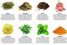 nature's apothecary / I haven't needed a GP for a long time, most minor health issues can be solved through natural means, just by understanding nutrition and medicinal plants.  / by emma