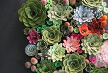 <<< succulents >>> / All about succulent plants / by Artistry International, Inc.