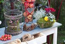 Höstpyssel i växthuset / Willab Garden tipsar om pyssel i växthuset.