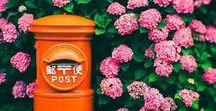 Flower 花 / Flower, Ikebana, Gardening  花、生け花、ガーデニング