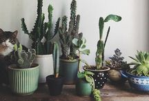 Green Thumbs / by Bethany