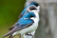 Birds / by Kris Wheelock