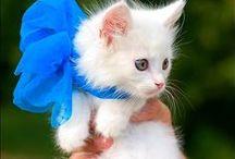 Kittens =^.^=