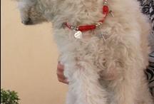 Egalement pour nos amis les chiens.. / portez un bracelet assortis au collier de votre chien ! ( ou autre animal ...) c'est la Very Micky attitude ...