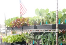 Plants / Flowers, Culinary herbs, Native plants to attract birds and butterflies, and vegetable seedlings available every week