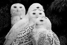 Owls!!!!!! / by Amy R.