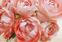 Flores e plantas / Flores, plantas, cactos, suculentas... Tudo que traz alegria pra dentro da nossa vida.