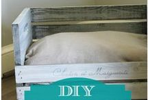 DIY pet projects / by AllPaws Website