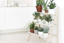 Serene Greenery / Plants are a wonderful way to bring serenity and peace into any space. These are plants I love, spaces with plants that inspire me and solutions for bringing greenery into any location.