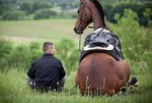 Horses / by Kelly Bothe
