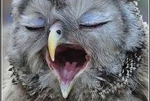 Animals OWLS