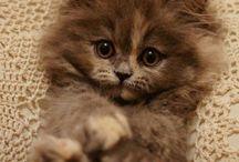 Søte dyr
