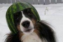Funny Animals / #Funny #Animals