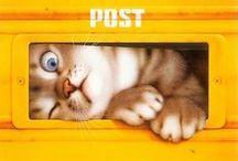 ART Cats by Makoto Muramatsu