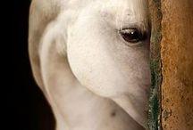 horses... love!