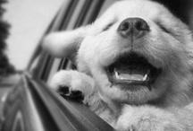 inspiration: dogs!!!