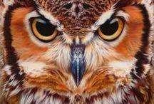 Photography - Wildlife and Animals