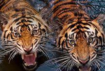 Animals fotos / by SGSIE