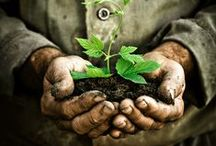 Soil, Beautiful Soil!