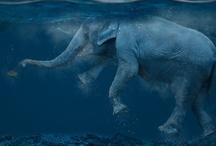 I love Elephants / by Amy Burgess