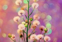 Bokeh Nature Photography