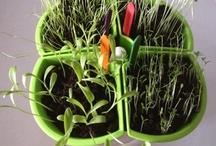Inspire Children To Garden