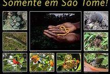 Outra fauna de São Tomé e Príncipe / animals