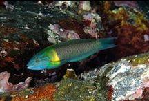 Peixes de São Tomé e Príncipe
