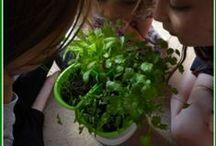 Science & Plants