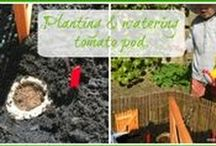 Miniature Gardens For Kids / Inspirations to involve children in gardening.