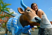 CowParade NC: It's Legend-dairy! / Cowabunga! CowParade, the world's largest public art exhibit, has stampeded into the Triangle! On display throughout Chapel Hill, Durham and Raleigh from now through December 7, 2012, these beautiful bovine will be auctioned to help benefit the N.C. Children's Hospital. LEARN MOO-RE HERE: http://cowparadenc.com/