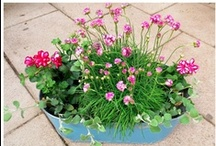 Plants for balcony / Perfect plants for balcony in the city