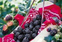 Edible garden / Edible garden design, DIY ideas & information to make most of your growing space with each season.