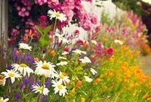 Kukat / Puutarha - Flowers / Garden