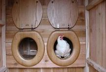 chicken coops / chickens