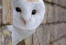 OWLS / This makes me smile. A lot. I love owls (: