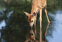 Precious Creatures / I am vegetarian........guess why?