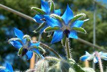 Medicinal herb garden