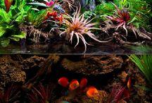 Terrariums,  Aquariums and Paludariums