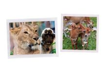 Animals / by ʟ.