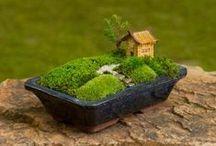 Mini-záhradky / Mini gardens