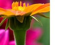 Flores  / Flowers - Blumen - Flores - Fleurs