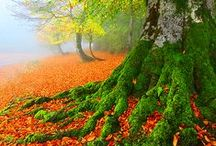 FANTASTIC FALL / Beautiful sights in the Fall Season. / by Nocturnal Alley