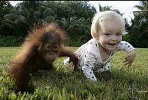 Funny - Nos amis les bêtes - Animals