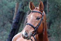 Schicke Hottys / Auf dieser Pinnwand finde ich Pins von schicken Pferen und Ponys :)