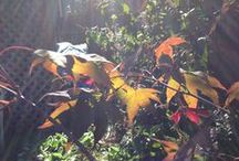 Fall 2014 California / Plants, baby / by Annie Anthony