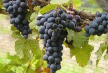Go wine tasting / Wineries worth visiting