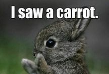 Funny, cute or stupid ;)